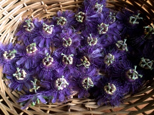 passiflorabasket